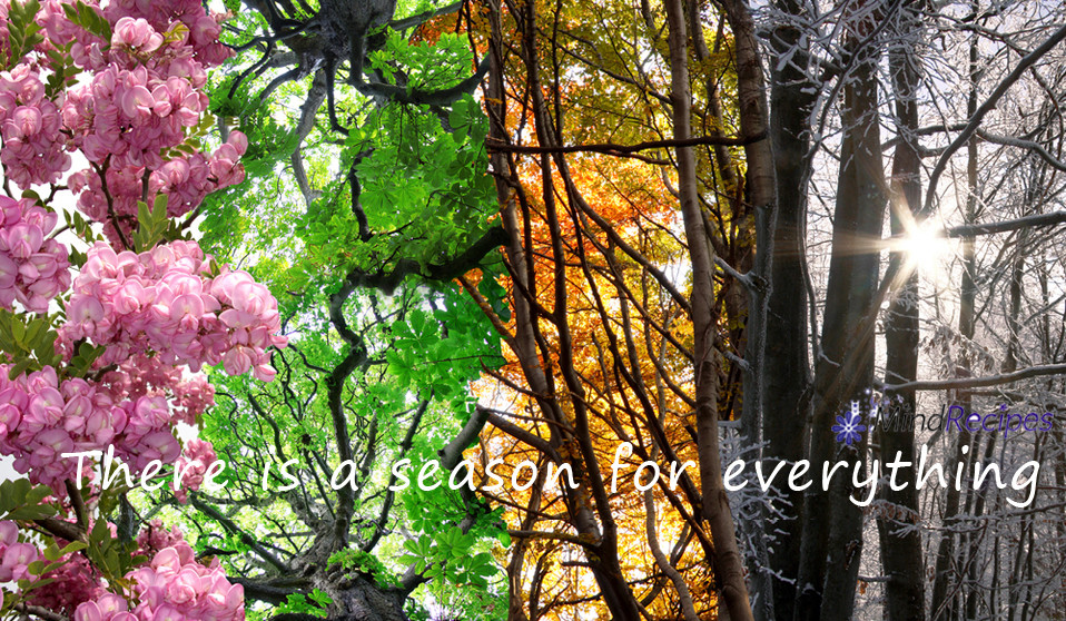 4 - seasons